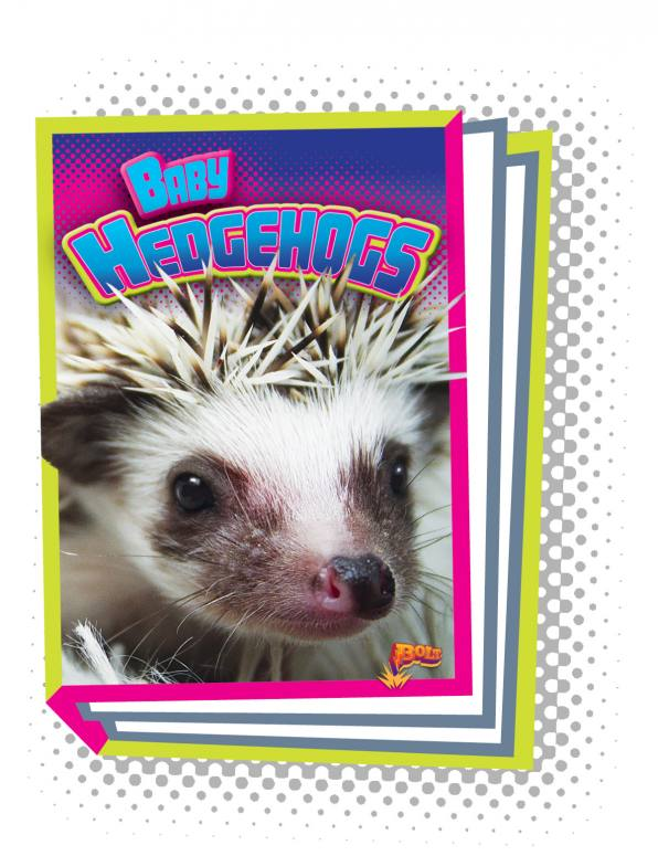 Baby Hedgehogs (Paperback)