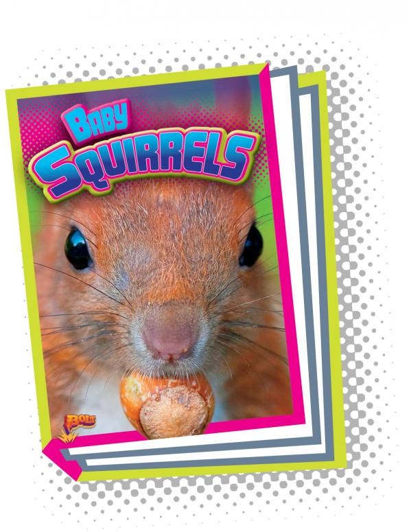 Baby Squirrels (Paperback)